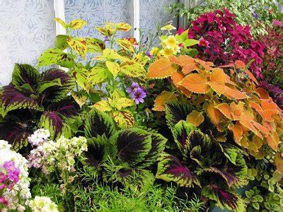 plants for facing gardens plants for north facing balcony garden