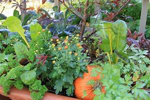 Plant these amazing flowers and see how your vegetable for Flowers to plant in vegetable garden