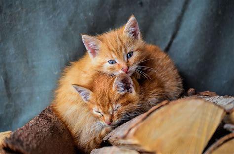 Wie Reinige Ich Meinen Katzen-kratzbaum Richtig