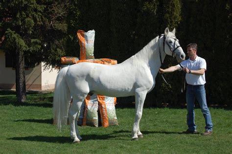 legidosebb hazai fedezomenre emlekezuenk lovasokhu