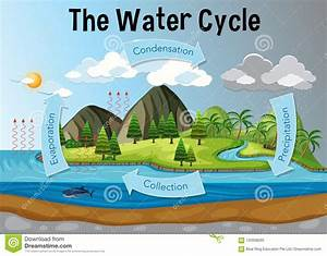 The Water Cycle Diagram Stock Vector  Illustration Of