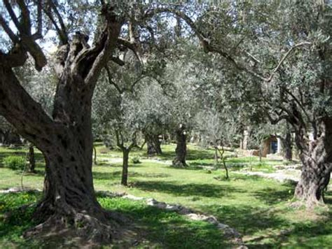 Garden Of Gethsemane Bible by 301 Moved Permanently