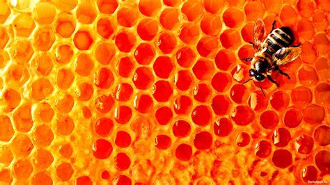honeycomb desktop wallpapers group 72