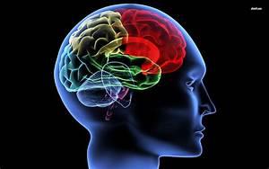 Human Brain Wallpaper   Biological Science Picture Directory  U2013 Pulpbits Net