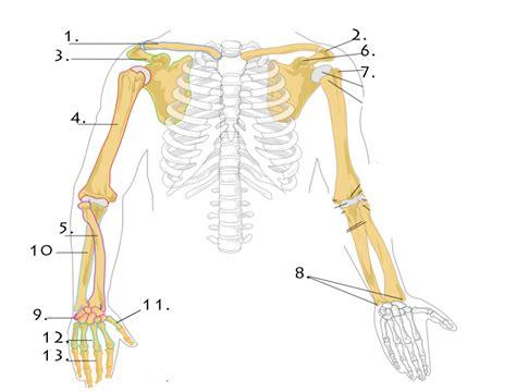 bone structure   point  proprofs