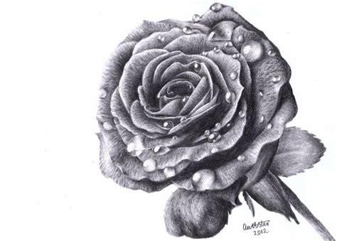 beautiful rose drawings  inspiration hative