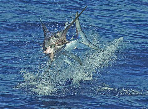 Half Day Boat Rental Marathon Fl by Fish Killgore Islamorada Fishing Charters Florida