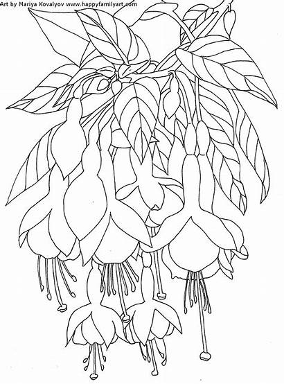 Coloring Pages Water Adults Flower Adult Fuchsia