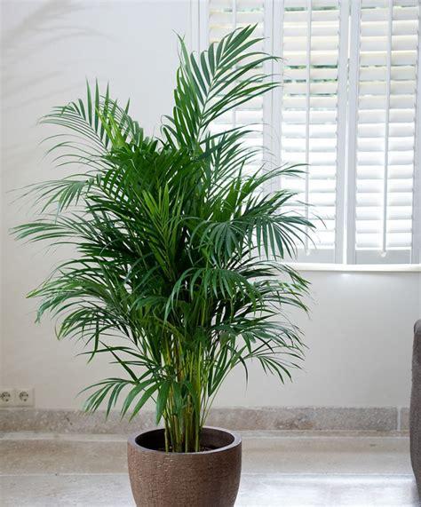 plante dans la chambre 5 plantes à mettre dans la chambre pour passer une nuit
