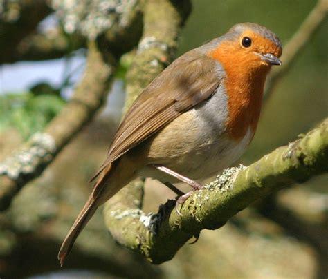 bird flower and fish robin