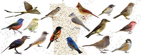 birding  minnesota  guide   backyard bird