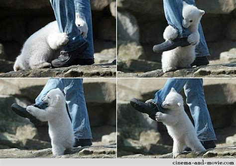 Polar Bear Attack Caught On Camera [pic]
