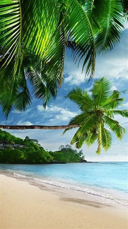 Palm Sunshine Beach Trees Landscape Tropical Coast
