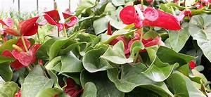 Marc De Café Plantes D Intérieur : plantes fleuries ou plantes vertes apporter de la couleur dans son int rieur ~ Melissatoandfro.com Idées de Décoration