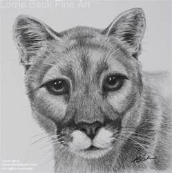 Mountain Lion Pencil Drawing