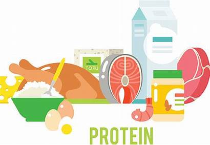 Protein Clip Vector Proteins Illustration Illustrations Similar