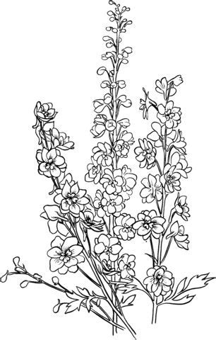 Delphinium Coloring page | Tattoos | Delphinium tattoo, Larkspur flower tattoos, Birth flower