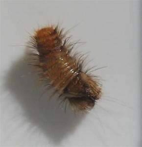 Insecte Qui Mange Le Bois : bete des bois poisson naturel ~ Farleysfitness.com Idées de Décoration