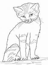 Coloring Realistic Cat sketch template