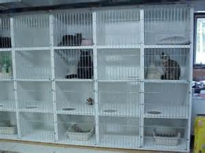 cat kennel jpeg image of ourcat condos