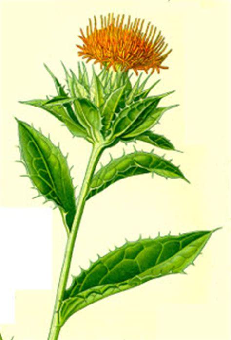 safflower seeds  alchemy works seeds  magic herbs