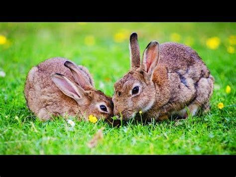 le de chevet lapin les animaux de la ferme le lapin