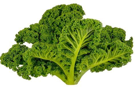 cuisiner du choux vert tout sur le chou kale le choisir le conserver le
