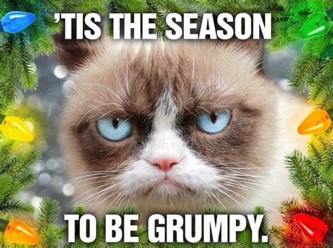 Christmas Cat Meme - grumpy cat memes christmas image memes at relatably com