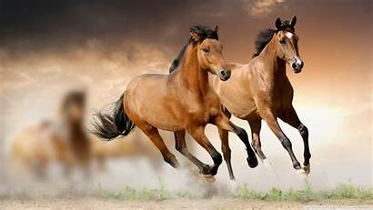 Horse Wallpapers Desktop Background Horses Wild Wall