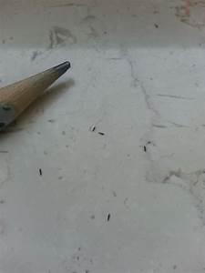 Kleine Tiere Im Mehl : kleine schwarze tiere was sind das f r viecher ~ Lizthompson.info Haus und Dekorationen