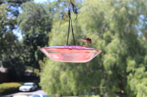 saucer style hummingbird feeder techshop