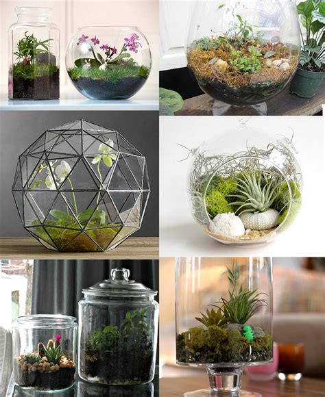 plant terrarium diy diy terrariums diy and tutorial links rags to couture