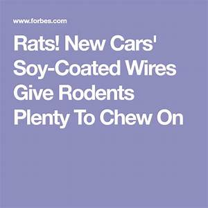 Rats  New Cars U0026 39  Soy