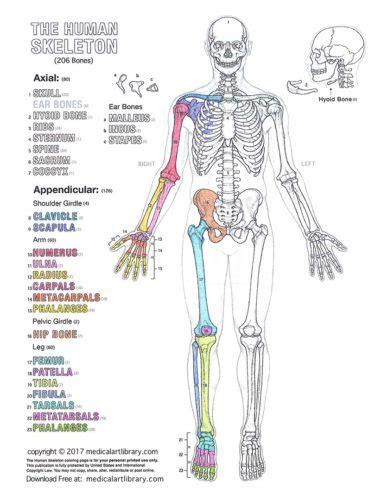 Coloring Atlas Of Human Anatomy by Human Diagrams Library