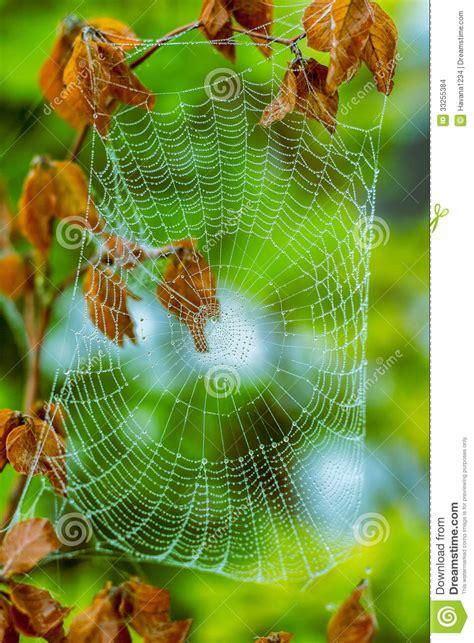 une toile d araign 233 e effrayante assez effrayante pour images stock image 33255384
