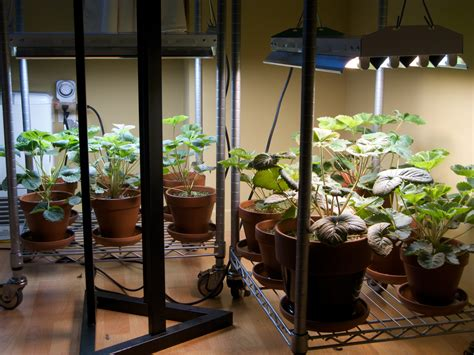 grow ls for indoor plants lighting your indoor garden electronic products