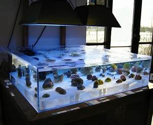 Plexiglas Aquarium Nach Maß : time to start up the old saltwater tank the hull truth ~ Watch28wear.com Haus und Dekorationen