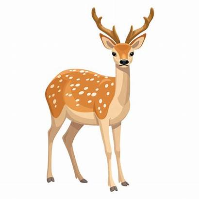 Deer Fallow Illustrations Clip Vector Info