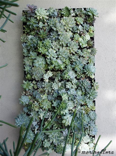 Vertical Succulent Garden by Best 25 Succulent Wall Ideas On Succulent