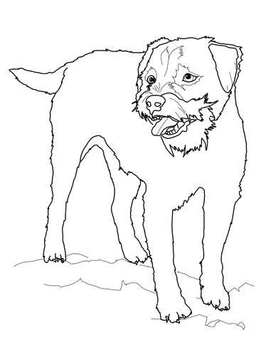 border terrier coloring page supercoloringcom