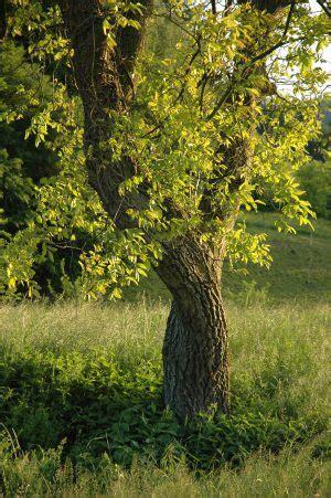 der gemeinsame hochzeitsbaum kalender