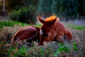 Baby Horse - Foal in the grass - 9buz