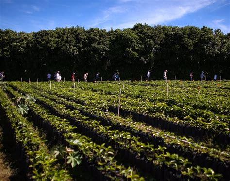 A Photo Journey To Coffee Farms In Costa Rica Chemex Coffee Filters Edmonton Bialetti Maker Kitty Italian History Stainless Steel Moka Pot Vs Aeropress Victoria's Basement Best Instant Brand Singapore