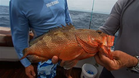 grouper rock hind bahamas sea snapper deep fishing mutton