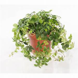 Plante Verte D Appartement : plante verte appartement ~ Premium-room.com Idées de Décoration