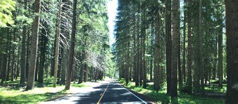 Prospect, Oregon - A Mushroom Lover's Delight - Modern Forager