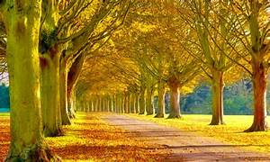 Scenery, Heaven, Leaves, Tress, Nature, Forests, Ultra, 2560x1600, Hd, Wallpaper, 1808791, Wallpapers13, Com