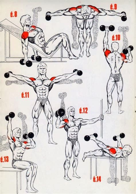 die besten  exercises  deltoids ideen auf pinterest