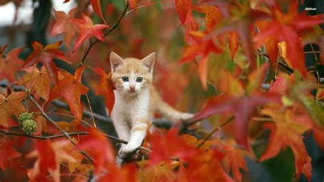 Hd Animal Wallpapers For Mac - fall with animal hd wallpaper for mac 4022 amazing