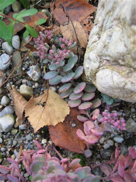 Saisonfinale Charmante Herbstblueher by Garten Impressionen Herbst Impressionen Im Garten